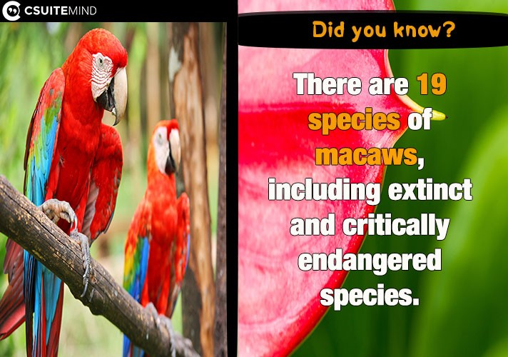 there-are-19-species-of-macaws-including-extinct-and-critically-endangered-species