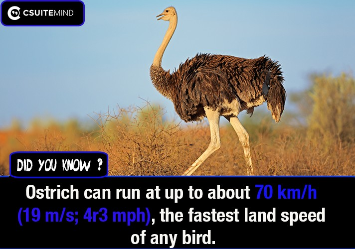 ostrich-can-run-at-up-to-about-70-kmh-19-ms-4r3-mph6-the-fastest-land-speed-of-any-bird