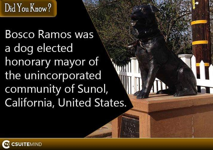 bosco-ramos-was-a-dog-elected-honorary-mayor-of-the-unincorporated-community-of-sunol-california-united-states