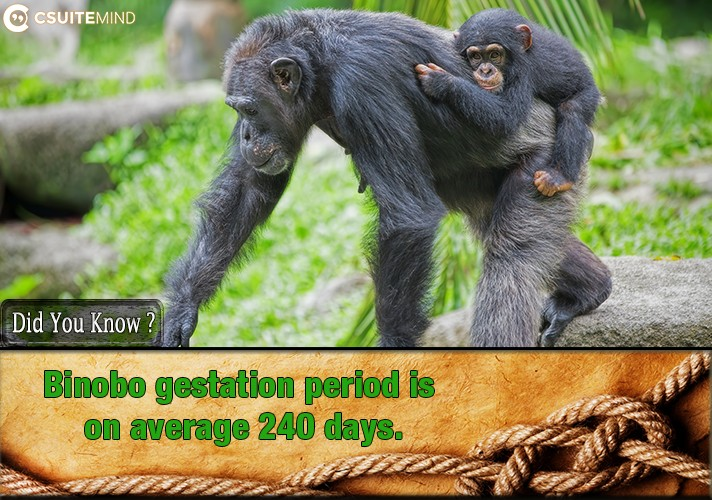 binobo-gestation-period-is-on-average-240-days