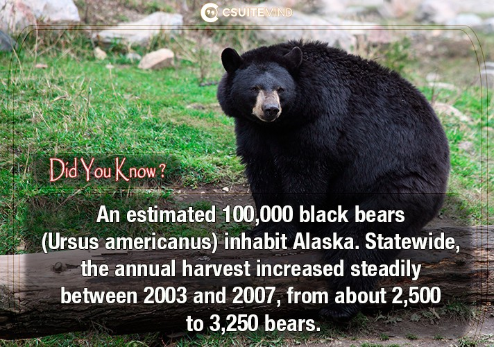 an-estimated-100000-black-bears-ursus-americanus-inhabit-alaska-statewide-the-annual-harvest-increased-steadily-between-2003-and-2007-from-about-2500-to-3250-bears