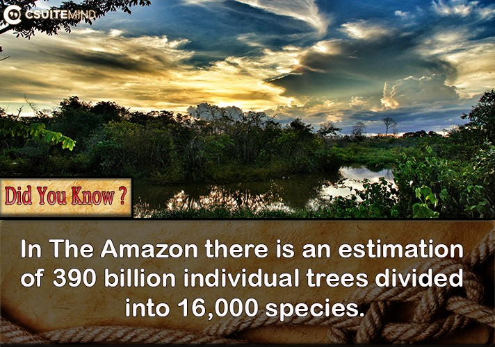 in-the-amazon-there-is-an-estimation-of-390-billion-individual-trees-divided-into-16000-species