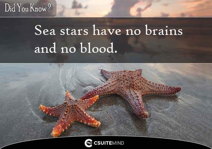 did-you-know-sea-stars-have-no-brains-and-no-blood