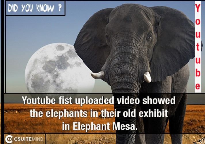 youtube-fist-uploaded-video-showed-the-elephants-in-their-old-exhibit-in-elephant-mesa
