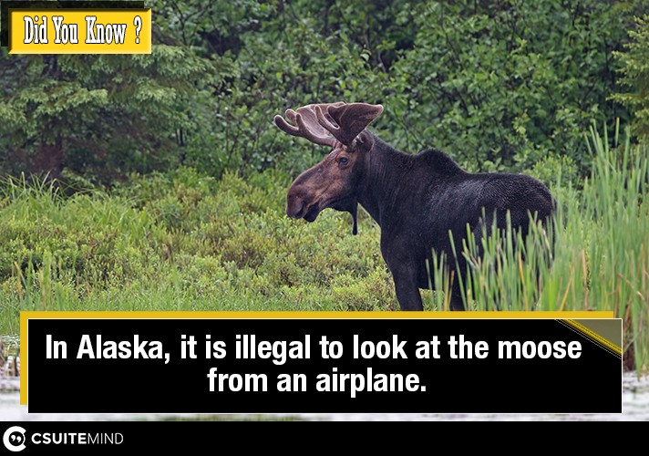 in-alaska-it-is-illegal-to-look-at-the-moose-from-an-airplane