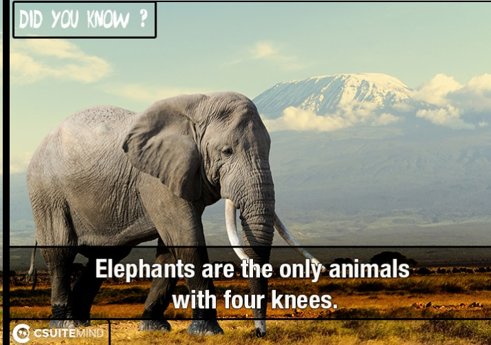 elephants-are-the-only-animals-with-four-knees