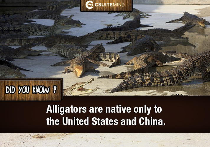 alligators-are-native-only-to-the-united-states-and-china