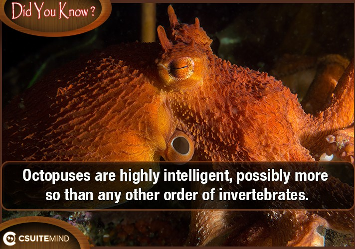 octopuses-are-highly-intelligent-possibly-more-so-than-any-other-order-of-invertebrates