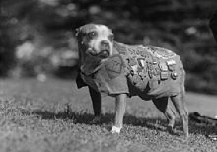 sergeant-stubby-is-an-american-dog-who-was-promoted-to-the-rank-of-sergeant-through-combat-during-world-war-1