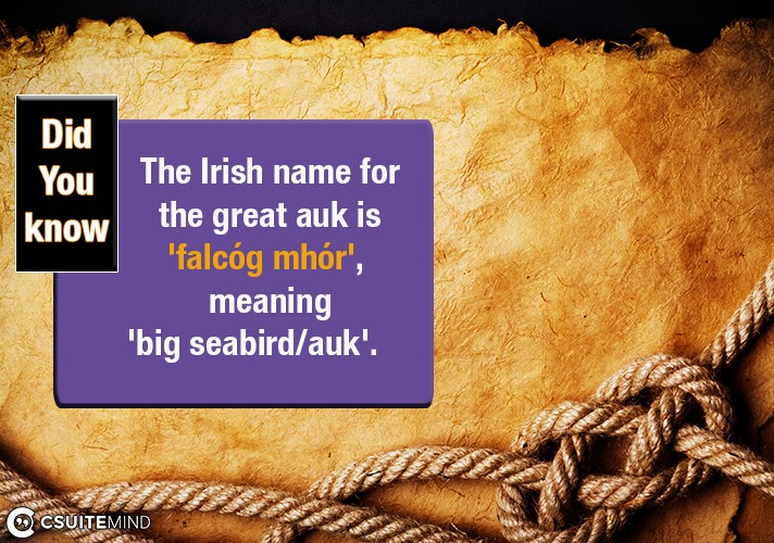 the-irish-name-for-the-great-auk-is-falcog-mhor-meaning-big-seabirdauk