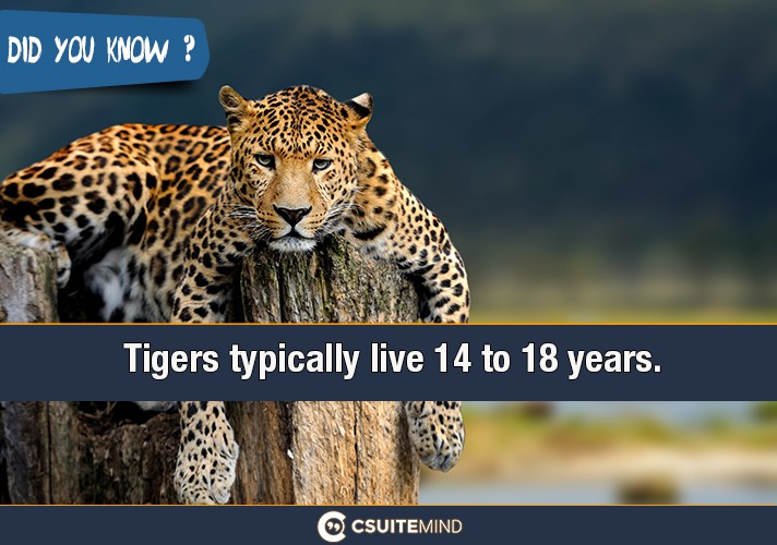 tigers-typically-live-14-to-18-years