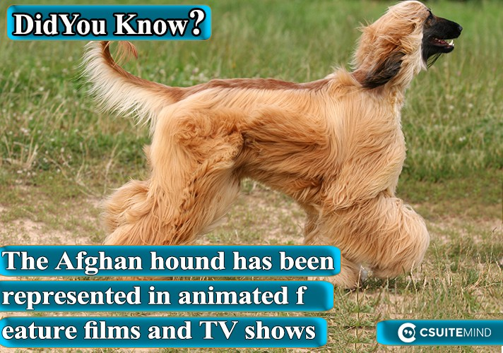 the-afghan-hound-has-been-represented-in-animated-feature-films-and-tv-shows