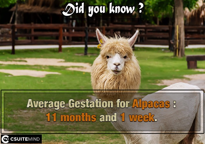 average-gestation-alpacas-11-months-and-1-week