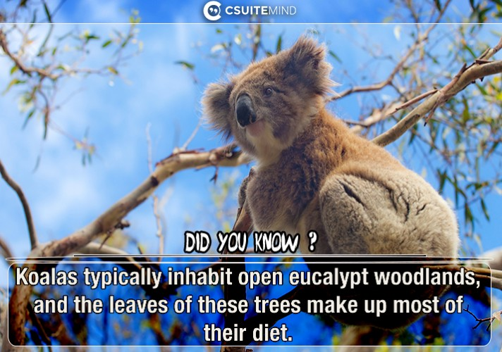 koalas-typically-inhabit-open-eucalypt-woodlands-and-the-leaves-of-these-trees-make-up-most-of-their-diet