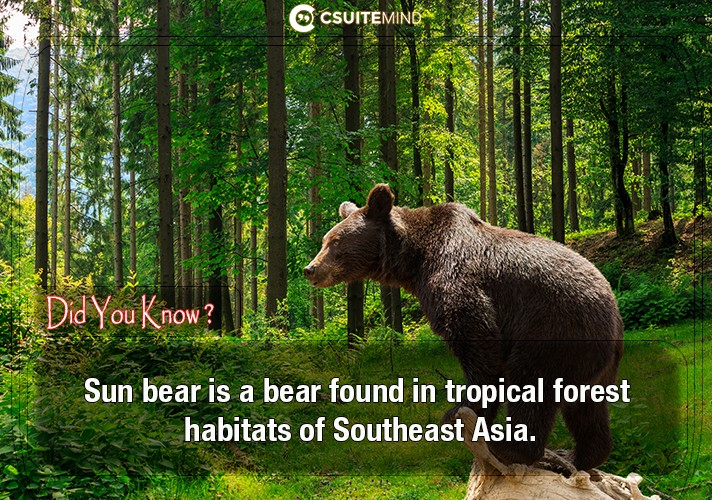 sun-bear-is-a-bear-found-in-tropical-forest-habitats-of-southeast-asia