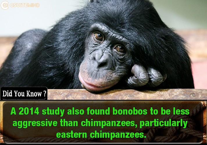 a-2014-study-also-found-bonobos-to-be-less-aggressive-than-chimpanzees-particularly-eastern-chimpanzees