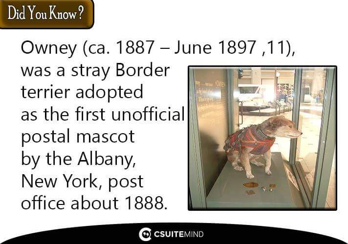 owney-ca-1887-june-11-1897-was-a-stray-border-terrier-adopted-as-the-first-unofficial-postal-mascot-by-the-albany-new-york-post-office-about-1888