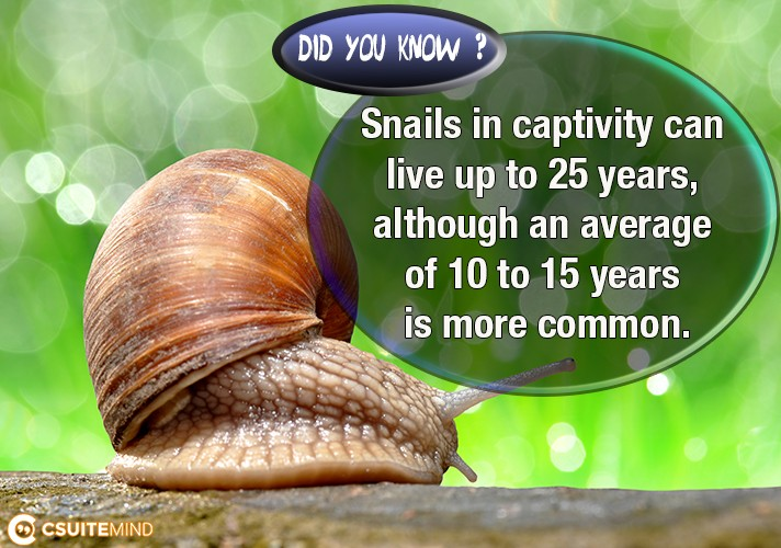 snails-in-captivity-can-live-up-to-25-years-although-an-average-of-10-to-15-years-is-more-common