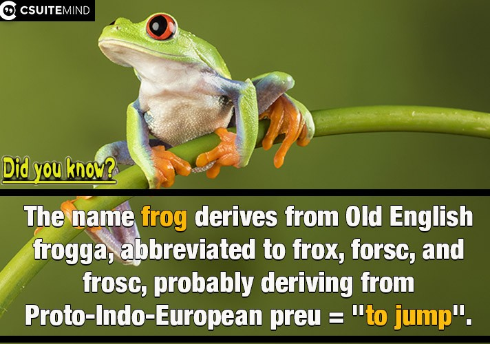 the-name-frog-derives-from-old-english-frogga-abbreviated-to-frox-forsc-and-frosc-probably-deriving-from-proto-indo-european-preu-to-jump