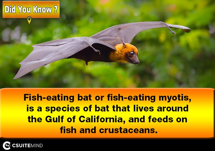 fish-eating-bat-or-fish-eating-myotis-is-a-species-of-bat-that-lives-around-the-gulf-of-california-and-feeds-on-fish-and-crustaceans