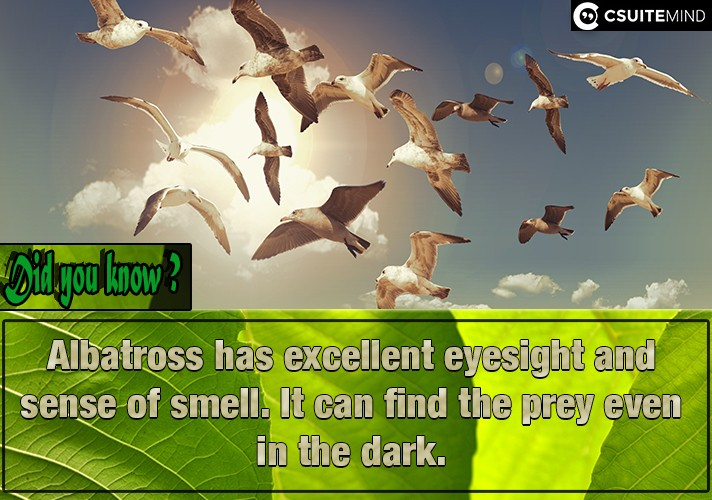 albatross-has-excellent-eyesight-and-sense-of-smell-it-can-find-the-prey-even-in-the-dark