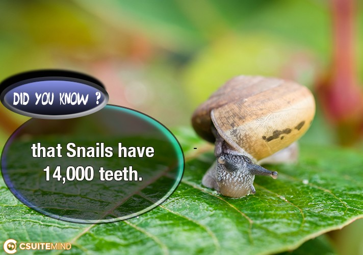 did-you-know-that-snails-have-14000-teeth