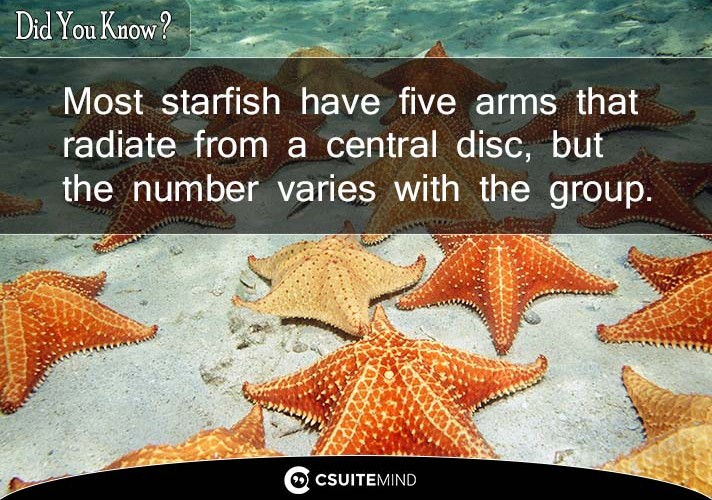 most-starfish-have-five-arms-that-radiate-from-a-central-disc-but-the-number-varies-with-the-group