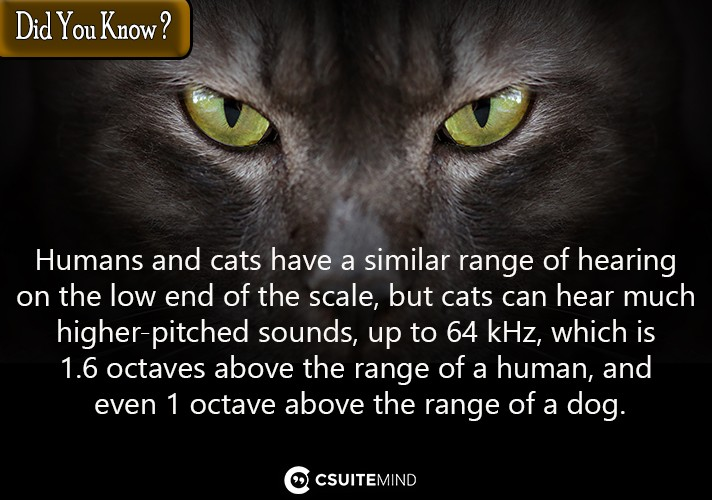 humans-and-cats-have-a-similar-range-of-hearing-on-the-low-end-of-the-scale-but-cats-can-hear-much-higher-pitched-sounds-up-to-64-khz-which-is-16-octaves-above-the-range-of-a-human-and-even-1-octave-above-the-range-of-a-dog