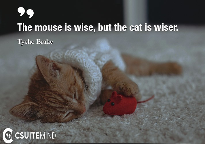 Cat And Mouse Quotes: Discover Most Popular Quotes By Leaders And By Successful